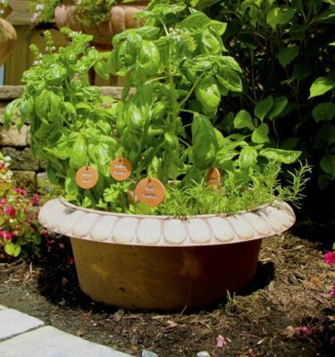 Bottomless Garden Planter for Perennial Herbs - PottyMouth