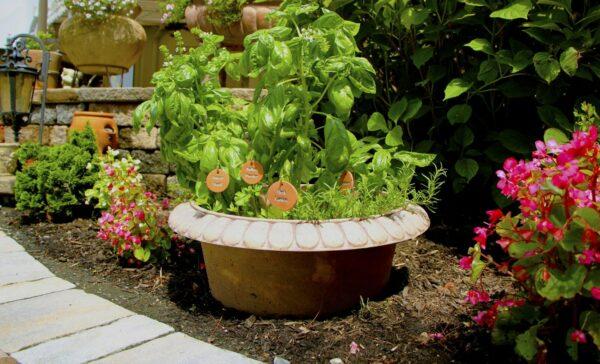 Bottomless Garden Planter for Perennial Herbs - PottyMouth